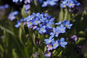 bela flor de cor azul brilhante