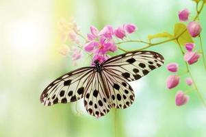 borboleta de papel de arroz foto