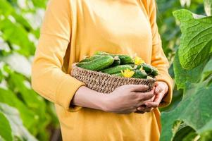 cesta com close-up de pepinos.