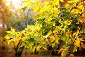 folhagem de outono ramos dia sol