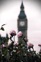rosas e torres de sino - big ben foto