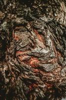 textura abstrata de casca de árvore foto