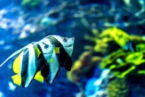 aquário foto