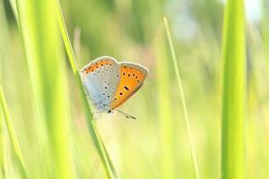 close de uma borboleta foto