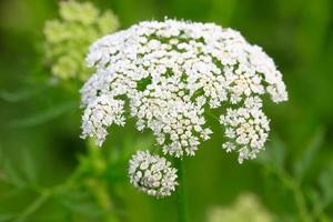 flores em plena floração foto