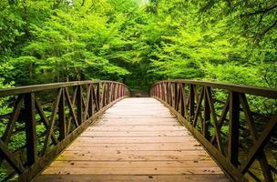 caminhando ponte sobre um riacho, em great smoky mountains national foto