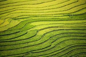 fazenda de arroz no Vietnã