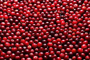 cranberries maduros para plano de fundo foto