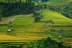 terraços de arroz vale vietnã