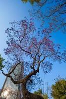 arranha-céu e árvores roxas do parque central de alameda foto