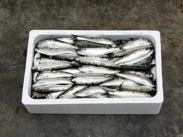 sardinha mediterrânea fresca foto