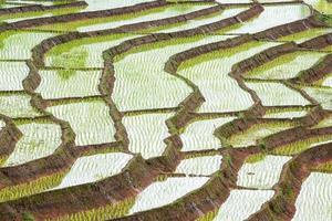 campo de arroz em socalcos em chiangmai norte da Tailândia foto