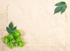 lúpulo fresco e grãos de cevada - closeup foto