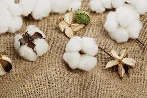 bolas de algodão foto