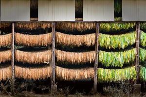 barracão de tabaco 2 foto