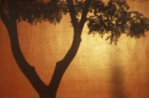 sombras na muralha da cidade proibida vermelha, beijing foto