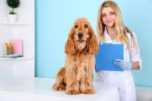 bela jovem veterinário feminino com cachorro na clínica foto