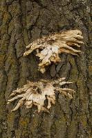 cogumelos em casca de árvore