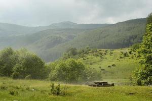 bela floresta verde após tempestade de granizo durante o verão foto