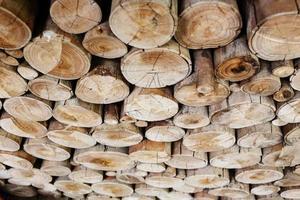 toras de madeira para a indústria