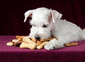 filhote de cachorro com ossos de biscoitos de cão foto