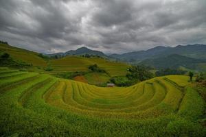 terraço de arroz no Vietnã