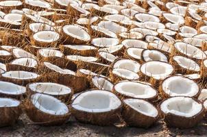 monte de metades de coco dobradas no chão para secar foto