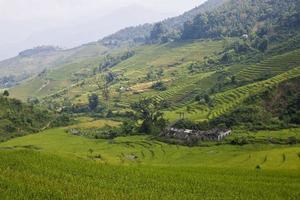 arrozais foto