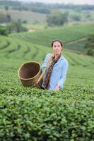 mulher bonita Ásia, colhendo folhas de chá na plantação, conceito de estilo de vida