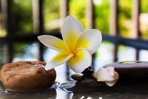 plumeria ou frangipani, decorado com pedras de água e cascalho foto