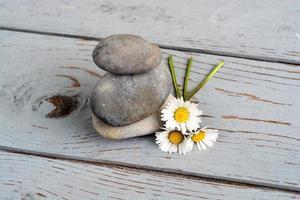 três pedras zen com margaridas em madeira velha