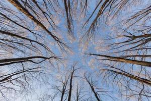 árvores olhando para cima foto