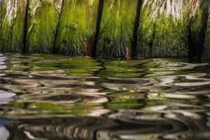postes de quebra-mar de madeira com reflexões