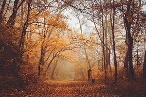 estrada da floresta de outono
