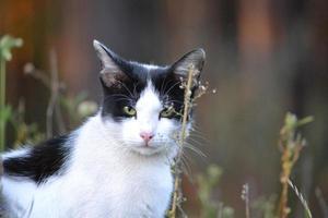 gato na grama foto