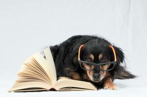 cachorro de leitura