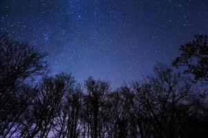uma bela noite estrelada no meio de uma floresta foto