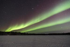 aurora sobre árvores em yellowknife, canadá