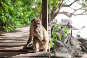 macaco sentado foto