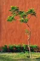 árvore e parede no fundo foto