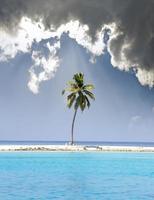 palmeiras na ilha tropical no oceano. Maldivas