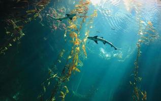 pequeno tubarão no oceano