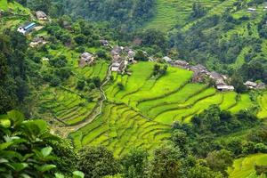 aldeia de Gurung entre campos de arroz no Himalaia, Nepal