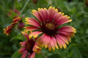 cobertor indiano flores silvestres foto