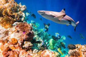 recife de coral tropical. foto
