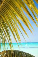 praia de areia branca tropical com coqueiros. foto