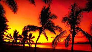 silhuetas de palmeiras em uma praia tropical ao pôr do sol