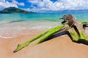 perfeita praia tropical perto de phuket, tailândia, ásia.