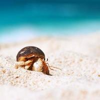 caranguejo eremita na praia foto