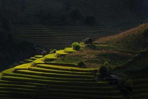 campos de arroz em terraços no Vietnã.